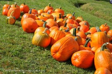 Pumpkins, Melick's Town Farm, Oldwick, NJ
