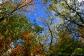 Jenny Jump State Forest, NJ