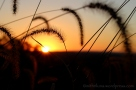 grass-sunset