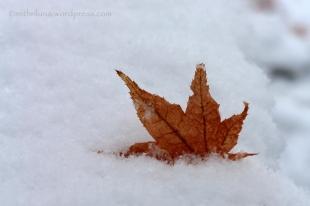 Snow leaf