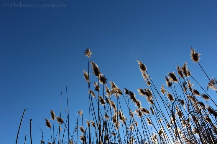 reeds2