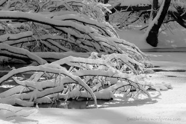 snowforest3