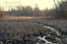 Great Swamp National Refuge
