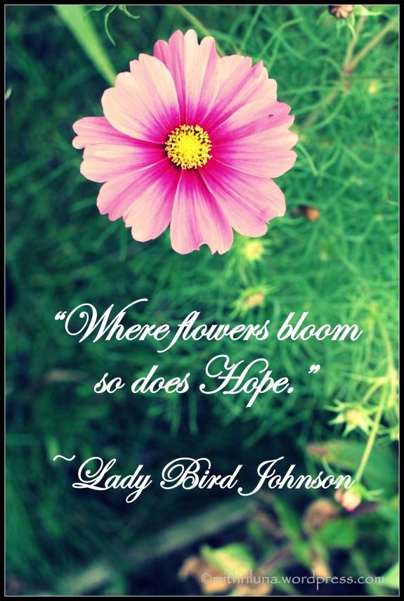 ladybirdjohnson