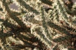Cactus in Phoenix AZ
