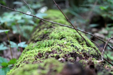 Moss on log, Delaware Water Gap, PA