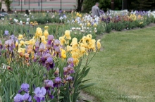Back in NJ and visiting Presby Memorial Iris Gardens.  My husband, who is our family gardener, is in the background.