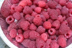Raspberry harvest from my garden