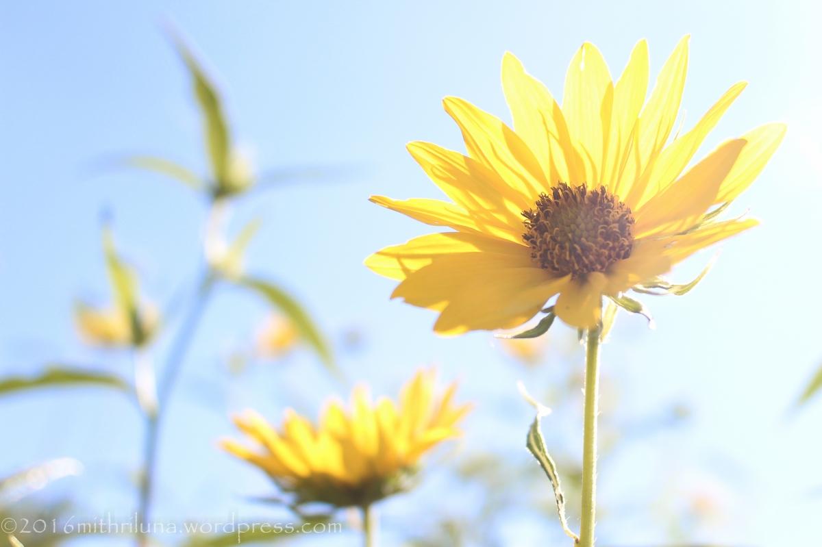 Nature Beauty Gratitude