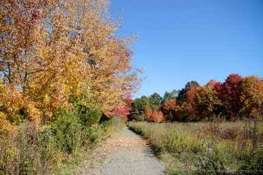 Great Swamp National Refuge, Basking Ridge, NJ